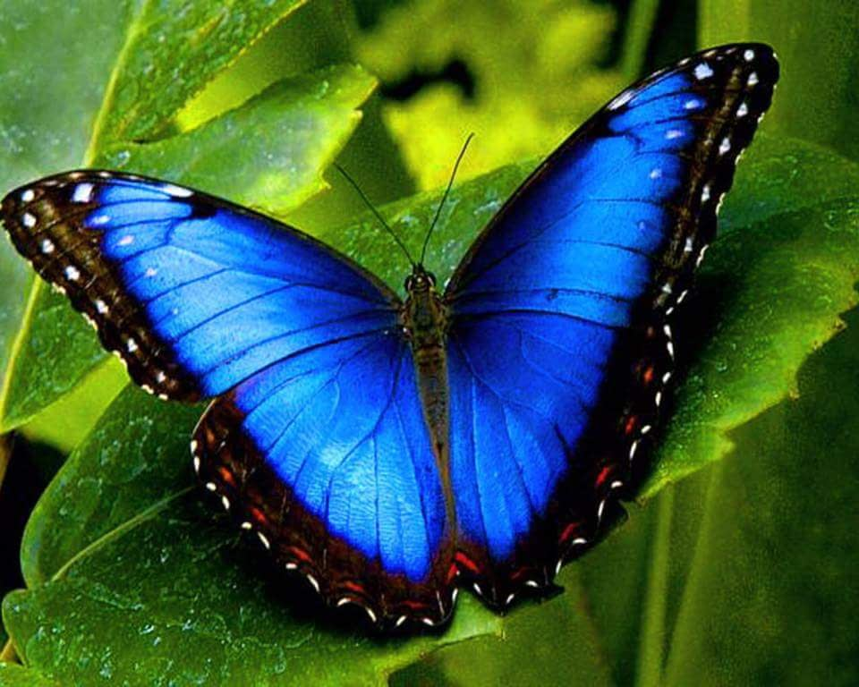 Blue Butterfly Leafy Background